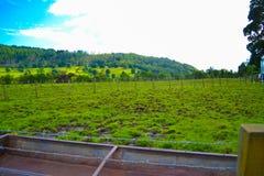 Ackerland in Kilmahog, Hochländer, Schottland Grüne Rasenfläche Stockfoto