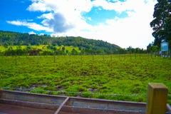 Ackerland in Kilmahog, Hochländer, Schottland Grüne Rasenfläche Stockfotografie