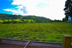 Ackerland in Kilmahog, Hochländer, Schottland Grüne Rasenfläche Lizenzfreie Stockfotos