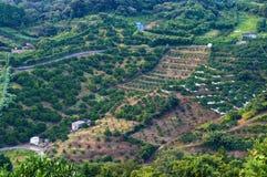 Ackerland in ländlichem Japan Stockfoto