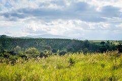 Ackerland-Landschaft, Wiesen und Felder Stockbild