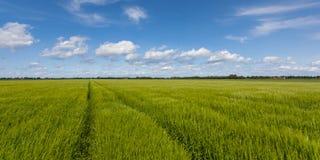 Ackerland-Landschaftssommer Lizenzfreie Stockfotografie