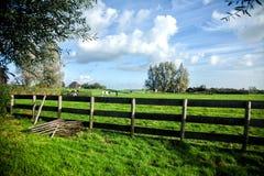 Ackerland Landwirt und Kühe auf einer grünen Wiese Lizenzfreie Stockbilder