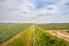 Ackerland mit Abzugsgraben Lizenzfreie Stockbilder