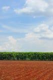 Ackerland mit Ansicht des blauen Himmels Stockbild