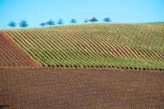 Ackerland mit Bäumen Stockfoto