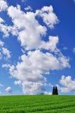 Ackerland mit Bäumen und Kumuluswolken im Himmel Stockfotografie