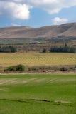 Ackerland mit bewässerten Feldern und Ernten Stockfotos