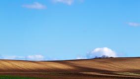 Ackerland mit blauem Himmel Lizenzfreie Stockfotografie