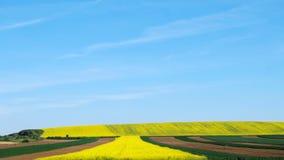 Ackerland mit blauem Himmel Stockfotografie