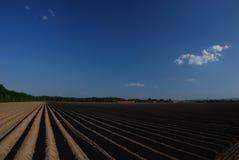 Ackerland mit blauem Himmel und Serie Stockbilder