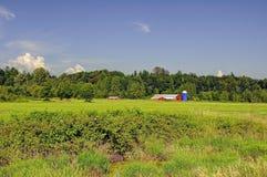 Ackerland mit blauem Himmel und weißen Wolken Lizenzfreie Stockbilder