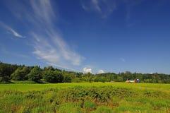 Ackerland mit blauem Himmel und weißen Wolken Stockbild