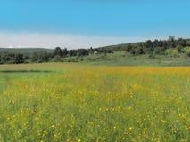 Ackerland mit Butterblumeen Stockbilder