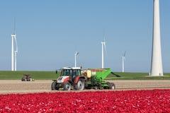 Ackerland mit dem Traktor, der Kartoffeln zwischen Tulpenfeldern und windturbines pflanzt Stockbild