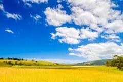 Ackerland mit dem Weiden lassen von Milchkühen Stockbild