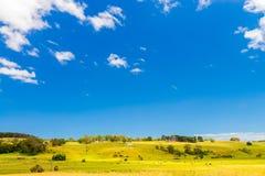 Ackerland mit dem Weiden lassen von Milchkühen Stockfotos