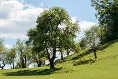 Ackerland mit Feld und Bäumen Lizenzfreie Stockbilder