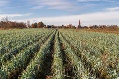 Ackerland mit Frühlingszwiebelwachsen und einem kleinen deutschen Dorf w Lizenzfreies Stockbild