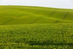Ackerland mit frischen Ernten Stockfoto