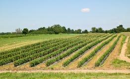 Ackerland mit Gemüseanlagen Stockbild