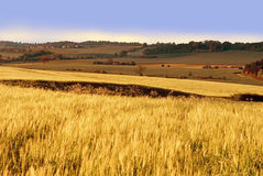 Ackerland mit Getreidegetreide Lizenzfreies Stockfoto