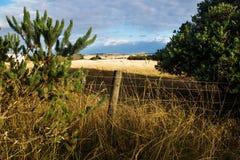 Ackerland mit Hügeln glänzte durch letzte Sonne auf Phillip Island, Victoria, Australien Stockbild