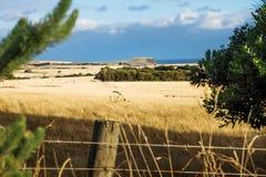 Ackerland mit Kühen glänzte durch letzte Sonne auf Phillip Island, Victoria, Australien Stockbild