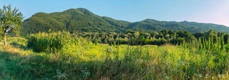 Ackerland mit Mais und Bohnen in einem Wald nahe einem bewaldeten Berg Lizenzfreie Stockfotos