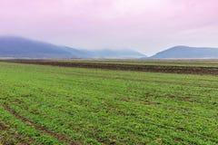 Ackerland mit nebelhaften Bergen Stockbild