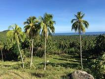 Ackerland mit palmtrees in den Hügeln von Anda Lizenzfreies Stockfoto