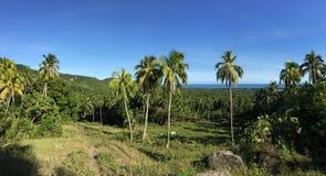 Ackerland mit palmtrees Panorama in den Hügeln von Anda Stockfotografie