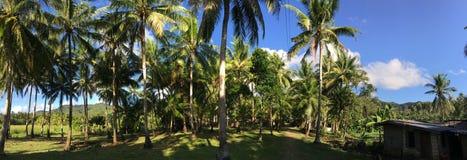 Ackerland mit palmtrees Panorama an der Landschaft Stockfoto