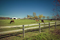 Ackerland mit Pferden - Herbstsaison Stockbilder