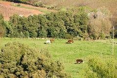 Ackerland mit Pferden und Kuh Stockbild