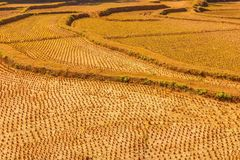 Ackerland mit Plantagenseite Stockfotos