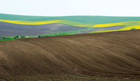 Ackerland mit Raps und junger Weizen- und jungersonnenblume Stockbild
