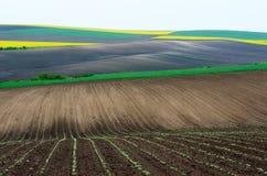 Ackerland mit Raps und junger Weizen- und jungersonnenblume Lizenzfreies Stockbild
