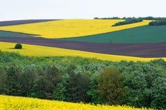 Ackerland mit Raps und junger Weizen- und jungersonnenblume Stockfotografie