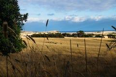 Ackerland mit Rolling Hills und Kühen glänzte durch letzte Sonne auf Phillip Island, Victoria, Australien Lizenzfreies Stockbild