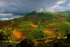Ackerland in Montag-Stau, Chiang Mai, Thailand Lizenzfreie Stockfotografie