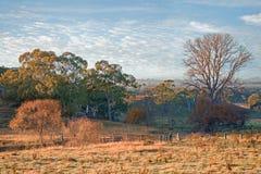 Ackerland morgens Stockfoto