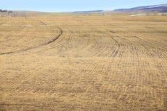 Ackerland nach dem schmelzenden Schnee Stockfotos