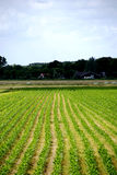 Ackerland nahe Amsterdam Stockfoto