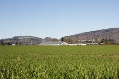 Ackerland nahe einer Stadt Stockbilder