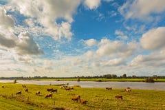 Ackerland neben dem niederländischen Fluss IJssel Stockfotos