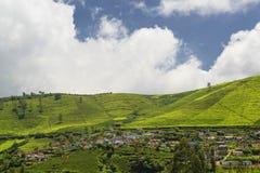 Ackerland in Nilgiris nahe Ooty Lizenzfreie Stockbilder