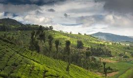 Ackerland in Nilgiris nahe Ooty Stockbilder