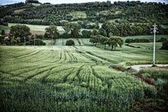 Ackerland Perugia Stockbilder