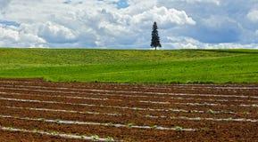 Ackerland-pflanzende Ernte-neue Landwirtschaft Lizenzfreie Stockfotos
